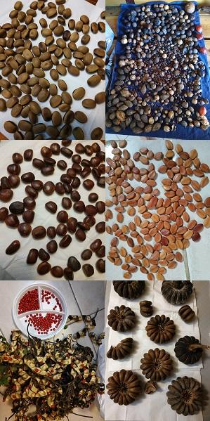 6 photos montrant 6 types de graines différentes