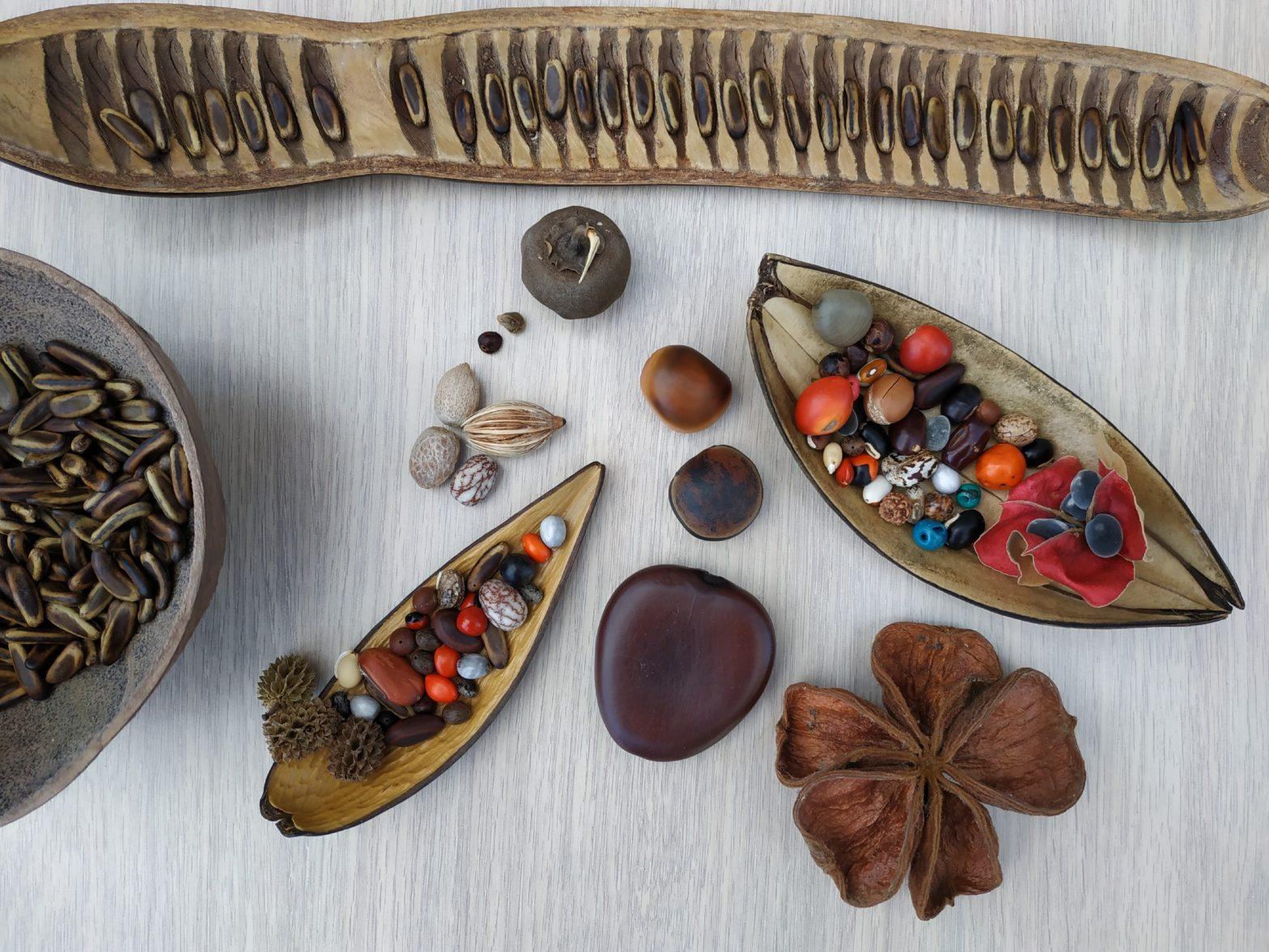 panaché de graines utilisées pour la confection de bijoux. On retrouve notamment la graine wawa, l'œil de bœuf, le flamboyant, le caconnier etc